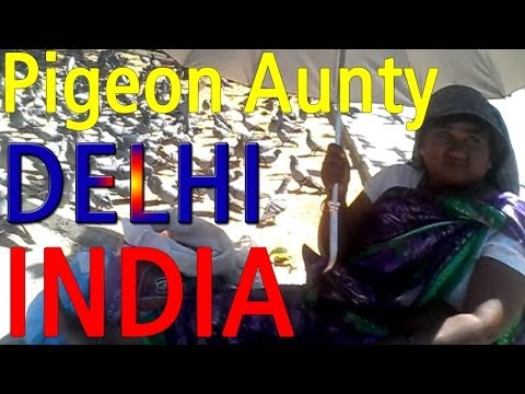 Pigeon Aunty - New Delhi, India video