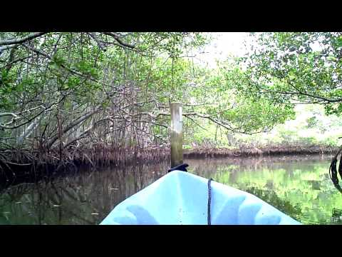 Kayaking The Mangrove Tunnels In Sarasota, FL @ Lido Key
