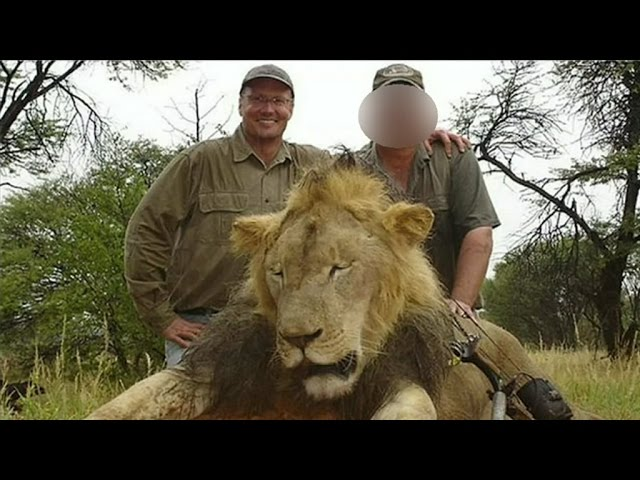 Cecil the lion: dentist Walter Palmer goes into hiding
