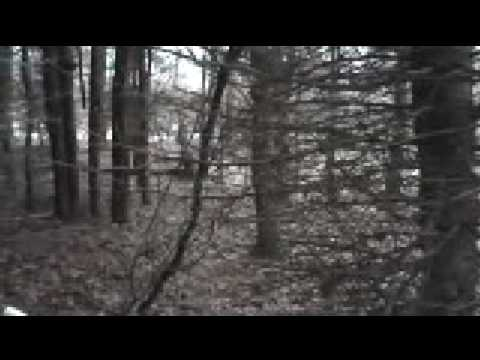 Alone In The Woods Short Version 100% REAL