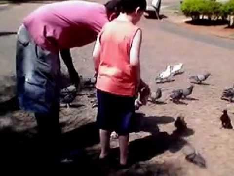 Thiago e Miguel tratando os pombos em Presidente Prudente