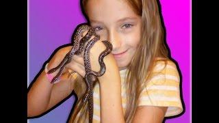 9 YR. OLD GIRL BREEDS HER FIRST SNAKES ♥♥ : SnakeHuntersTV