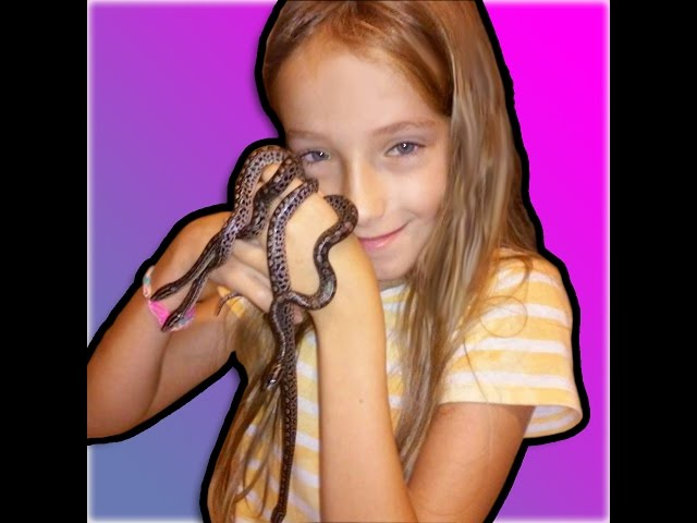 9 YR. OLD GIRL BREEDS HER FIRST SNAKES ♥♥ : SnakeHuntersTV