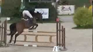 Pension chevaux de sport Ecurie de compétition CSO