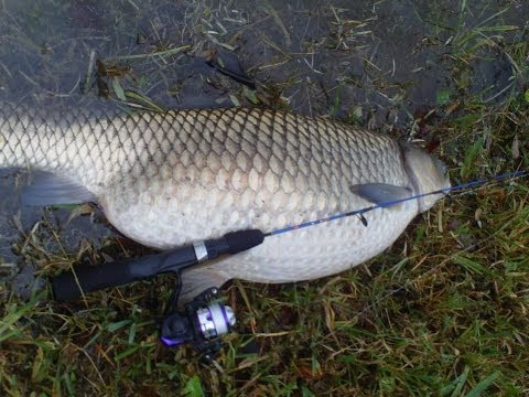 White amur for Mighty mite fishing pole