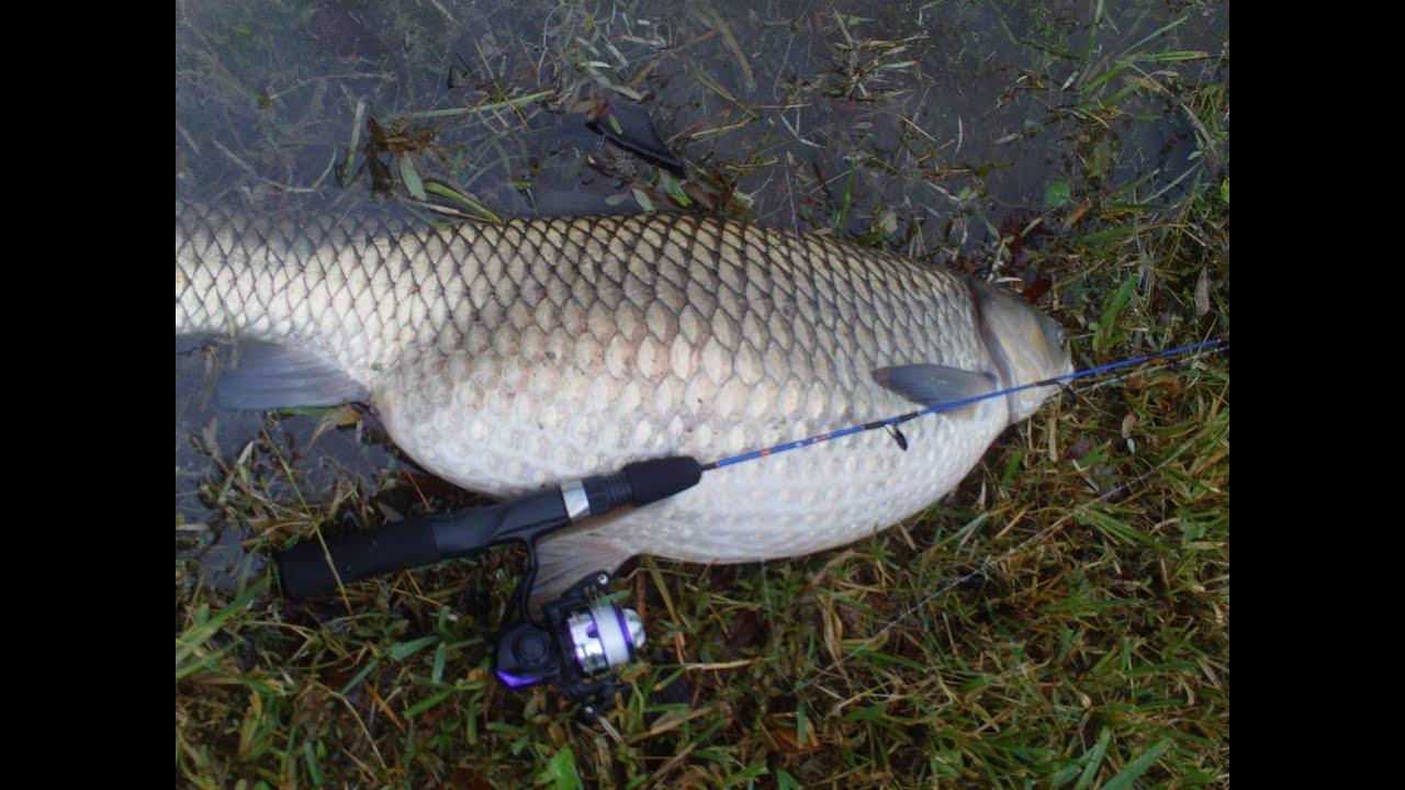 Mighty mite winter fat carp white amur gopro youtube for White amur fish