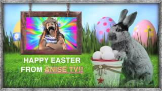 Anise TV - Happy Easter