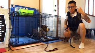 Dog Training | Murphy | Dog who hated the crate | Funtastic K9 Training