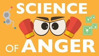 Download THE SCIENCE OF ANGER 3Gp Mp4