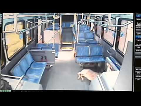 Deer Jumps Through Bus Windshield