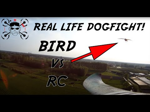 RC airplane: Easystar FPV attacked and hit by bird