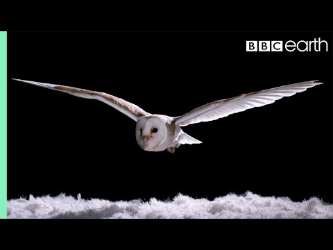 Experiment! How Does An Owl Fly So Silently? - Super Powered Owls - BBC