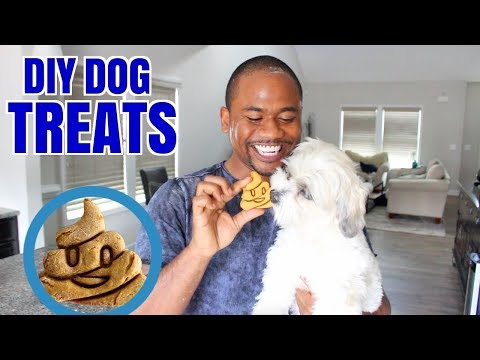 DOGS, super FUNNY, you will LAUGH! - Funny DOG VIDEOS compilation