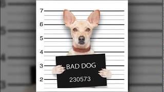 Brain Training For Dogs   Adrienne Farricelli - Good Dog Training Program ?