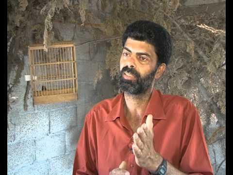 symh ibrhm - تربية الحسون في غزة - معاذ العامودي