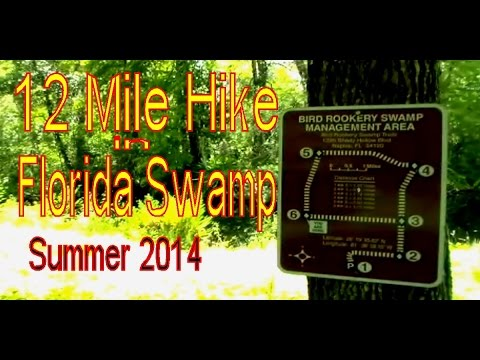 Hiking in Florida - CREW Bird Rookery Swamp Trail - 12 Miles - September 2014