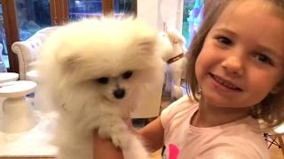 День Рождения канала Mister Max 4 года Funny puppy Gucci Birthday gift for kids party