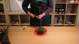 OASIS® Floral Products ~ How To ~ Cupids Arrow