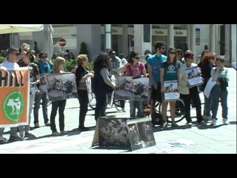 Giornata mondiale contro Green Hill e la vivisezione – Rimini 8 Maggio 2012