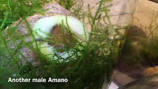 Shrimp Tank Set Up