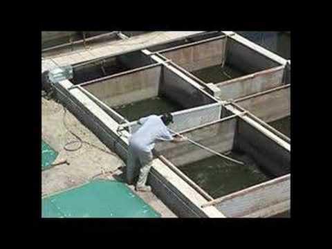 Salton Sea Algal biomass production