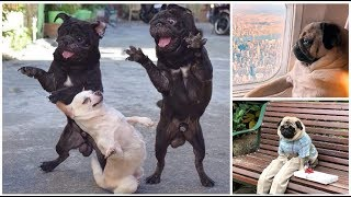 Awsome Funny Dogs Compilation -Try Not To Laugh CHALLENGE. FUNNY PET ANIMAL'S LIFE VIDEOS 2019