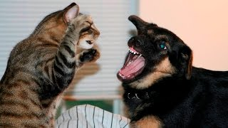 Funny Cats And Dogs Part 7 - Funny Cats vs Dogs - Funny Animals Compilation
