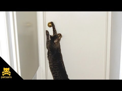 Cat opens door for puppies