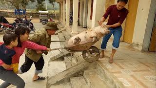 Teachers catch pigs