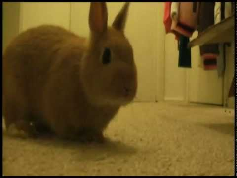 My bunny doing a barrel roll