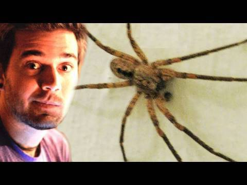 WORLDS BIGGEST KILLER SPIDER! (5.19.10 - Day 384)