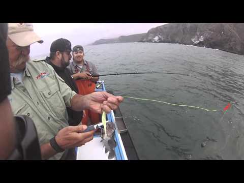 ROCK FISH ACTION ON THE NORTHERN CALIFORNIA COAST WITH STELO415