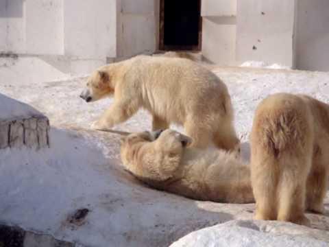 円山動物園(札幌)お母さんのララと双子ちゃんのイコロとキロル