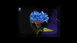 Make flower-cornflower from foamiran (spongy rubber). Diy. Handmade