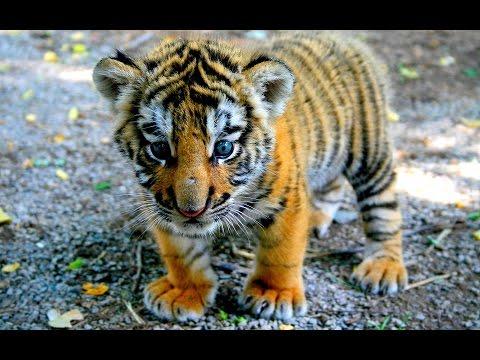 Die 10 Aller Niedlichsten & Süßesten Tiere Der Welt - Süße Tier Bilder | Tierbabys Niedlich & Süß