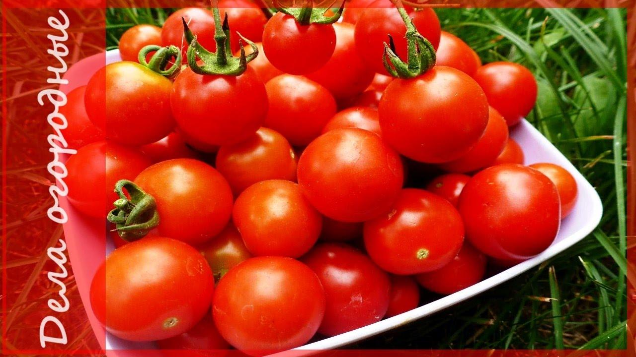 Посадка помидор томатов