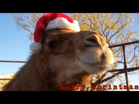 Christmas Camel wishes you a Merry Christmas