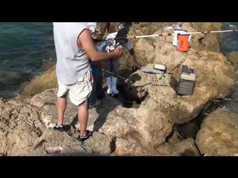 Sebastian Inlet fishing in Sebastian, Florida by floridahuntingfishingadventures.com