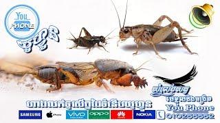សំលេងមេខ្មុលនិងចង្រិត (Mole Cricket&Crickets)