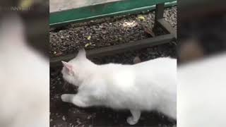BEST FUNNY ANIMALS!!! Crazy Animal Fails ( TRY NOT TO MOVE YOUR CHEEKS )