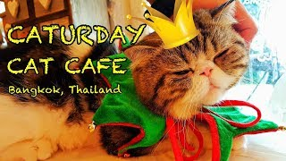 The Best Cat Cafe in Bangkok, Thailand 🐈