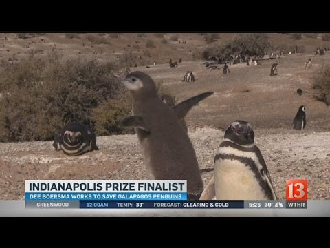 Indianapolis Prize finalist Dee Boersma: Penguins can teach us about the environment
