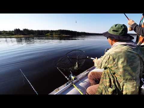 видео ловля на днепре сома