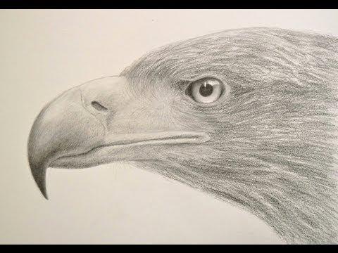Cómo dibujar una cabeza de águila - Cómo dibujar texturas