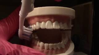 Realistic Dental ASMR Tooth Brushing& Cleaning Sounds No talking