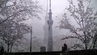 霧の東京 美空ひばり Misora Hibari Kiri No Tokyo