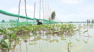 Đồng Tháp thiệt hại gần 21,7 tỷ đồng do mưa lũ