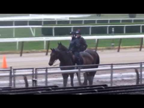Kentucky Derby winner Orb returns to the track May 8, 2013 at Belmont Park