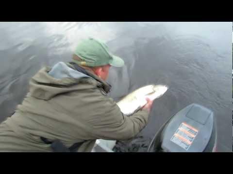 рыбалка троллингом на двине