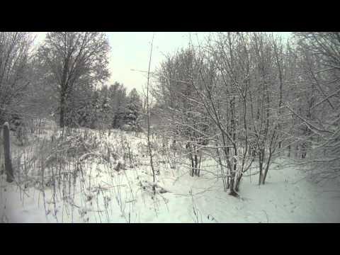 Охота на зайца с эстонской гончей 18+...